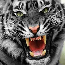 Wildcats Pic1